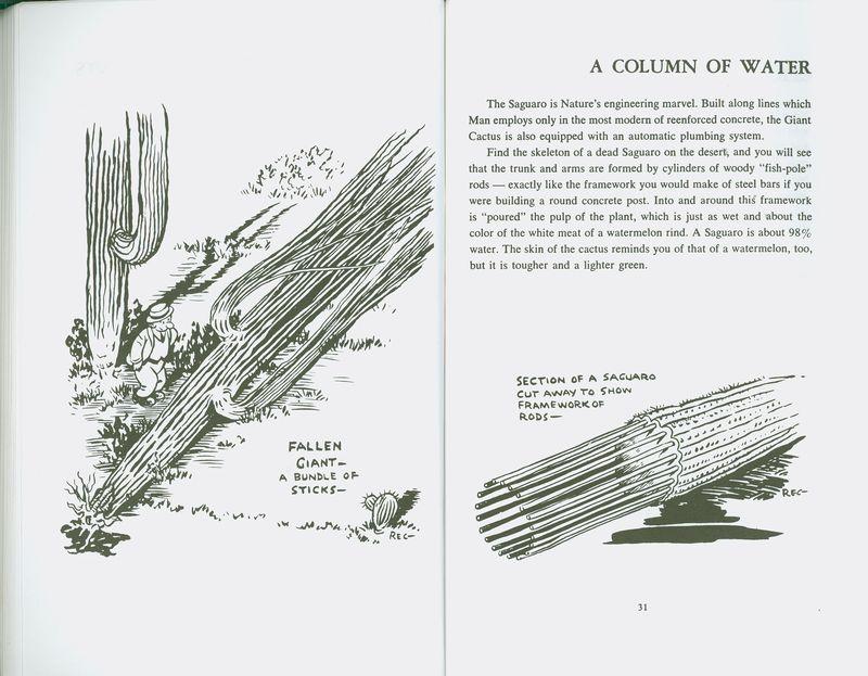 Saguaro Diagram